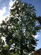Parker Tree Service 483 8733